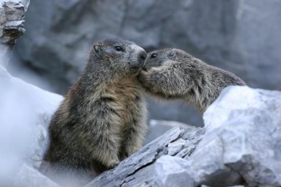 bisous de marmottes!